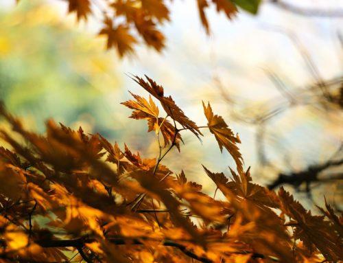 Neue Kurse im Herbst